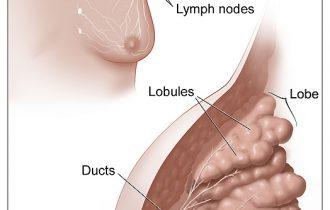 breast-cancer-anatomy